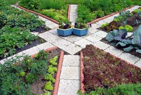 Линии декоративного огорода