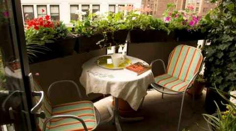 Сад на окне или балконе