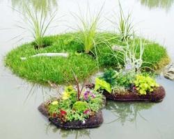 Украшение водоема: цветущие острова