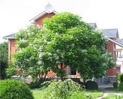 Взрослые деревья в ландшафтном дизайне