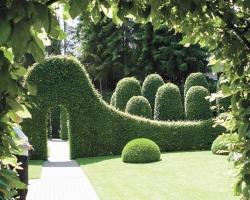 Как на даче создать живую изгородь
