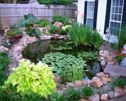 Три шага к роскошному декоративному пруду