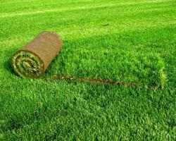 Особенности закладки газонов