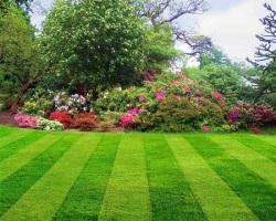 Особенности создания газона