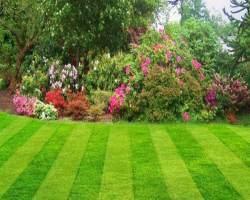 Как правильно обустроить газон