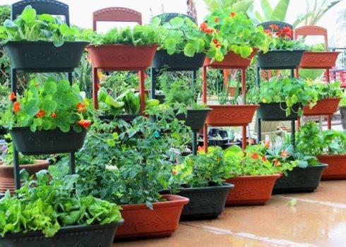 Правила посадки садовых растений в разные емкости