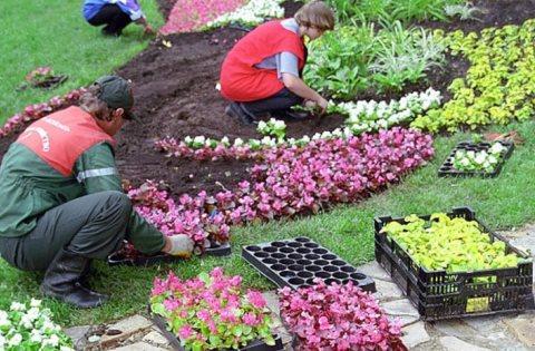 весенняя и осенняя посадка луковичных цветов