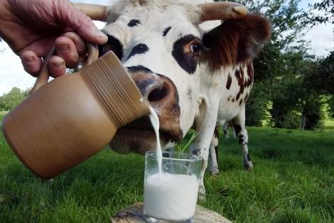 Правильный силос дает много молока