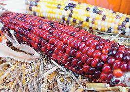Кукуруза и продукты на ее основе