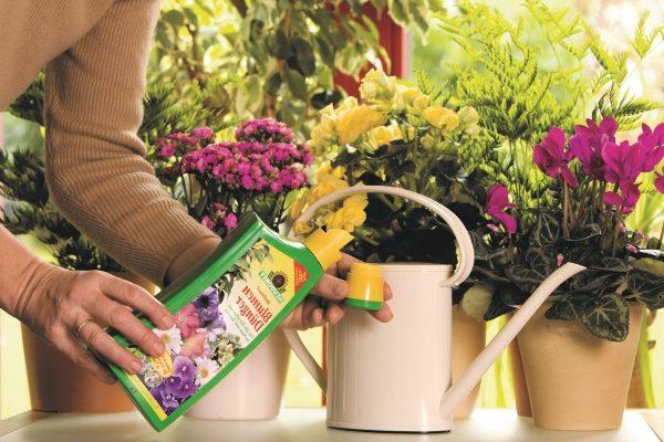 Лучшее удобрение для комнатных цветов