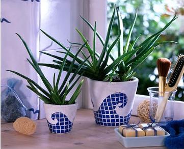 Растения на страже нашего здоровья